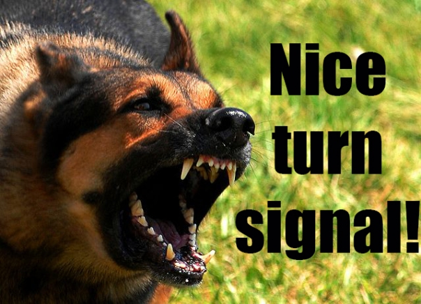 Nice Turn Signal